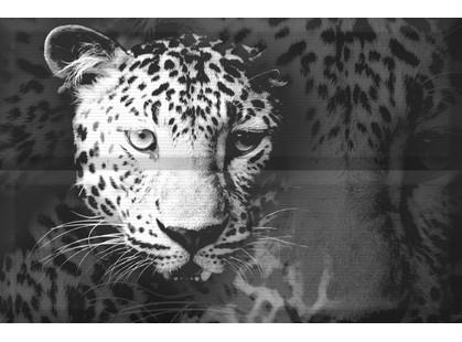 Absolut Keramika Aura Leopard Composicion Leopard