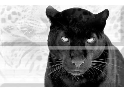 Absolut Keramika Aura Leopard Composicion Puma