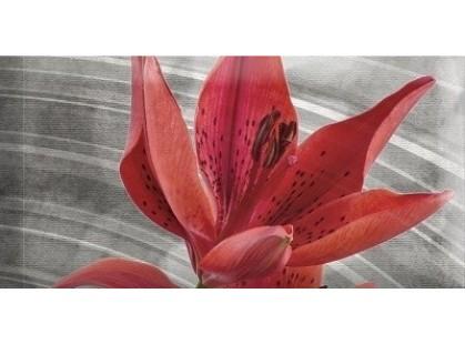 Absolut Keramika Monocolor 7.5х15 Biselado Mix Flowers RBW 7