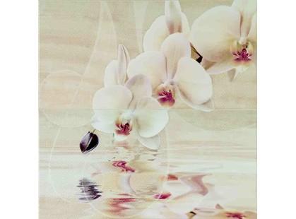 Aranda Onice Aranda Dec. Orchid Set. 2