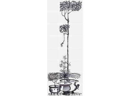 Bardelli Cuban Black 5 Растение В Горшке