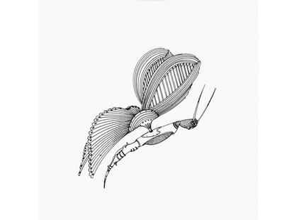 Bardelli Madama Butterfly BE20 (комплект, 10 из 12)