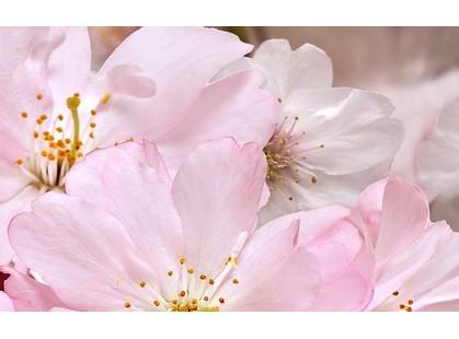Belleza Букет Розовый 09-01-41-663