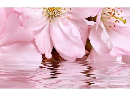 Belleza Букет Розовый 09-01-41-665