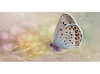 Belleza Мечта Бабочка