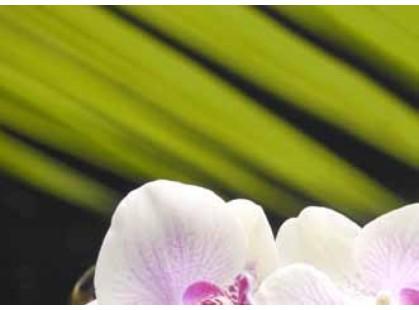 Березакерамика Азалия Панно Орхидея (4 пл)