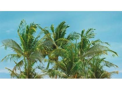 Ceradim Lagune Dec Palm Panno A