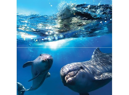 Ceramica Classic Waterlife Dolphins Панно 50x50