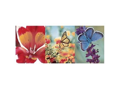 Ceramicalcora Washington Decorado Mariposa 4