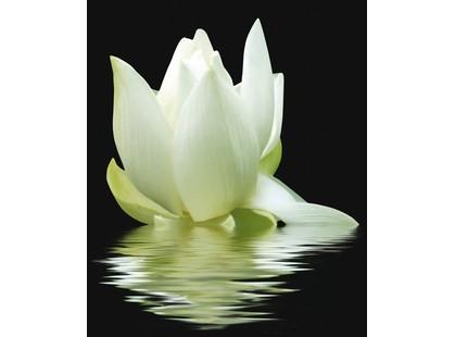 Cerrol City White Lilies