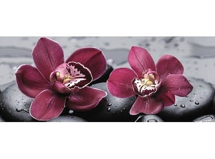 Cerrol City Orchid Centro
