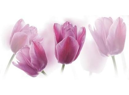 Cerrol Imperia Centro Tulipany/Tulipa
