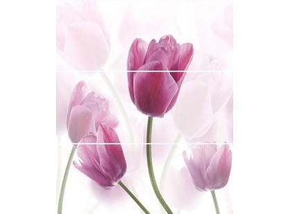 Cerrol Imperia Tukipany/Tulipa