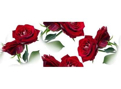 Cerrol Imperia Centro Rosarium-2 (розы)