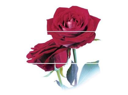 Cerrol Imperia Rosarium -2 (комп х3) (розы)