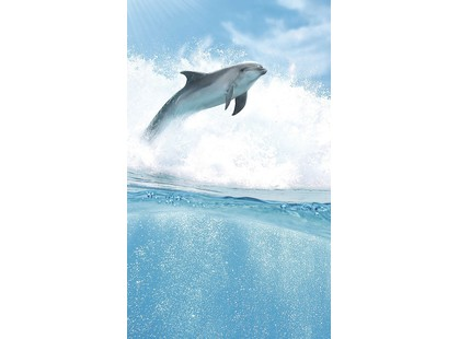 Cerrol Porto dolphins Porto Dolphins B