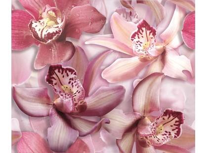 """Cerrol Porto Orchid Lila Porto Flowers """"Orchide lila"""""""