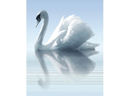 Cerrol Porto Water And Swan Water and Swan А