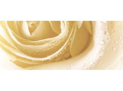 Cerrol Royal Syntia Rosa Tulip Syntia Rose 3