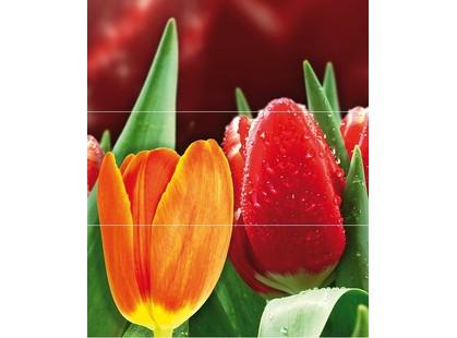 Cerrol Royal Syntia Rosa Tulip Syntia Tulip А (из 3 пл)