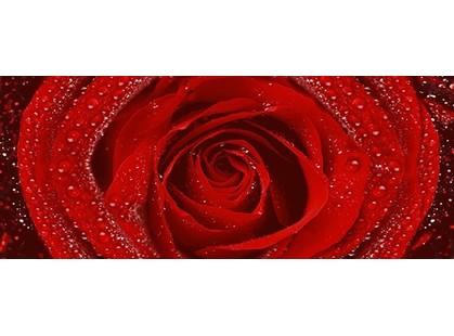 Cerrol Royal Syntia Rose 2
