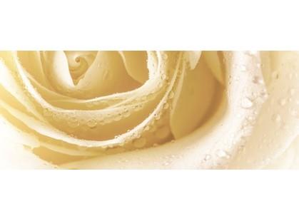 Cerrol Royal Syntia Rose 3