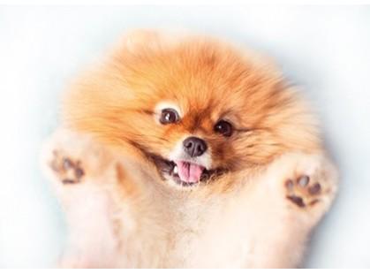Cersanit Pets Dog 2 (PS2M054D)