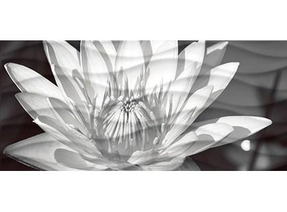 Cersanit Wave Blackflowers  (WA2G441D)
