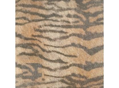 Cifre Cavallino Tiger