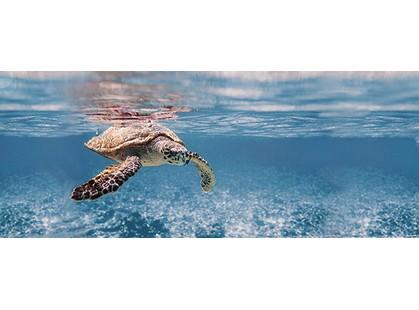 Дельта Керамика Ocean 20x50 Turtle