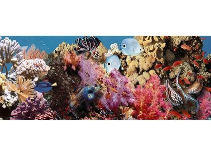 Дельта Керамика Ocean 20x50 Reef 1