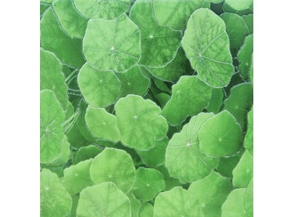 Infinity Ceramic Tiles Lotus Estanque Viejo Verde