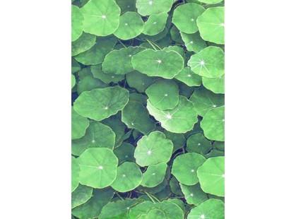 Infinity Ceramic Tiles Lotus Verde