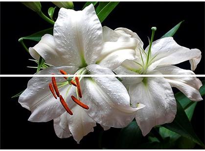 Keraben Dream Calas, Lirio, Flor Blanco Decor (2 pz)