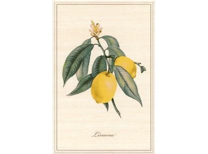 Kerama Marazzi Ботаника A2296\8164  Лимон