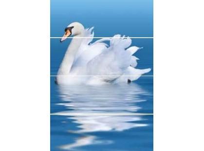Keros Aquarelle Swan A/B/C/D
