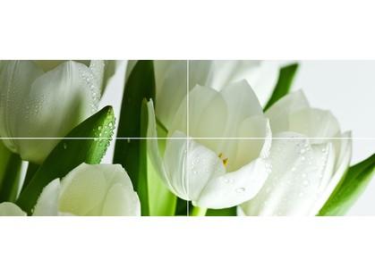 Polcolorit Arco Verde Tulipan