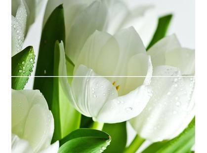 Polcolorit Arco Digital Tulipan