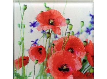 Profilab Wildflowers 3