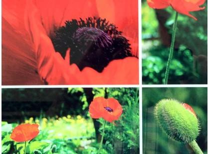 Profilab Wildflowers панно